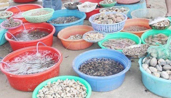 Đa dạng các loại hải sản tươi, sống được bày bán.