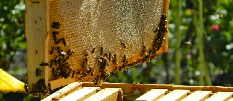 10 Điều Lí Giải Về Mật Ong Hoa Nhãn Có Màu Gì?